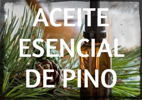 Aceite Esencial de Pino: Propiedades, usos y beneficios