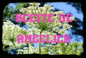 aceite esencial de angelica