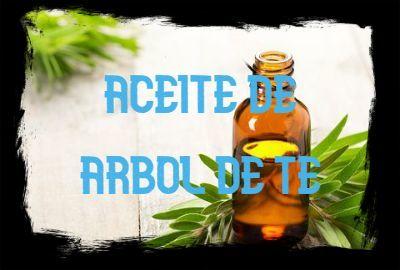 Aceite Esencial de ÁRBOL DE TÉ: Propiedades, usos y beneficios