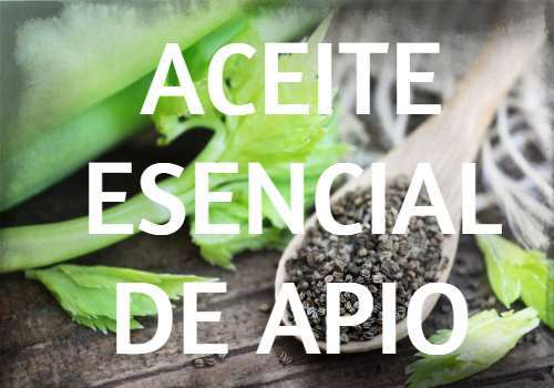 Aceite Esencial de Apio: Propiedades, usos y beneficios
