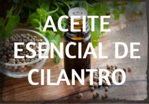 aceite esencial de cilantro