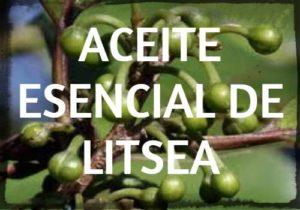 aceite esencial de litsea