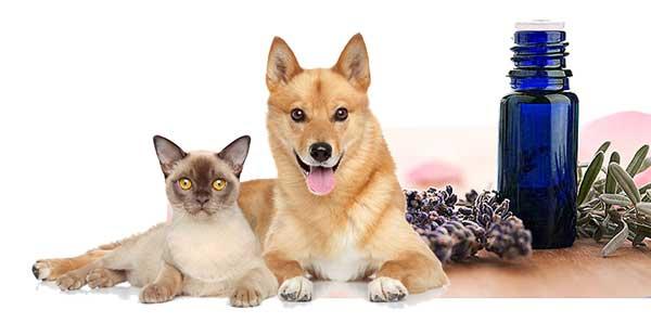 Aceites Esenciales y mascotas