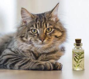 gatos y aceites esenciales