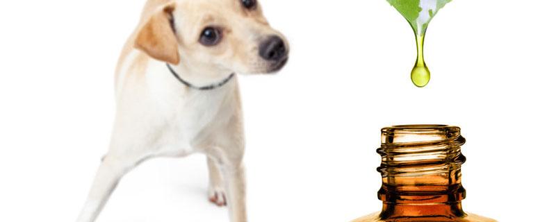 perros y aceites esenciales