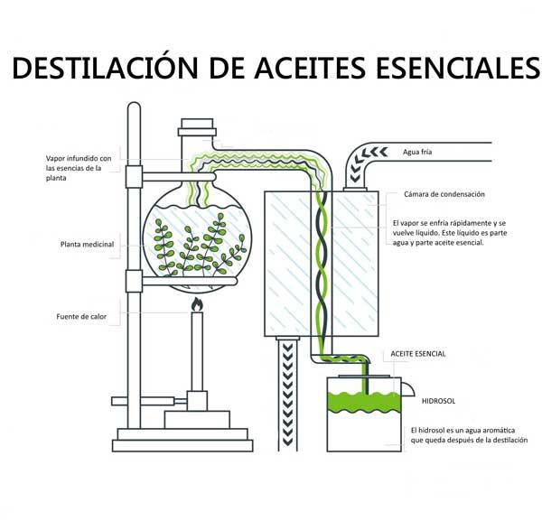 destilacion de aceites esenciales